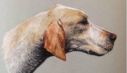 Je vous propose mes services de portraitiste animalière