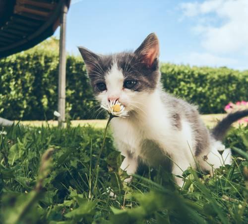 Jardin avec un chaton