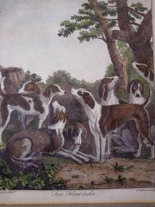 Gravure originale anglaise c. 1790, meute de chasse à courre
