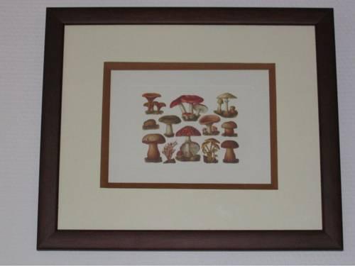 Tableau les champignons