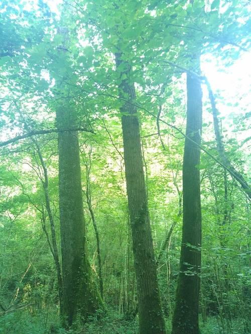 Gestionnaire forestier secteur Sud-Ouest
