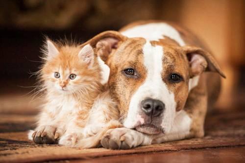 Propose services de Dog/Catsitting