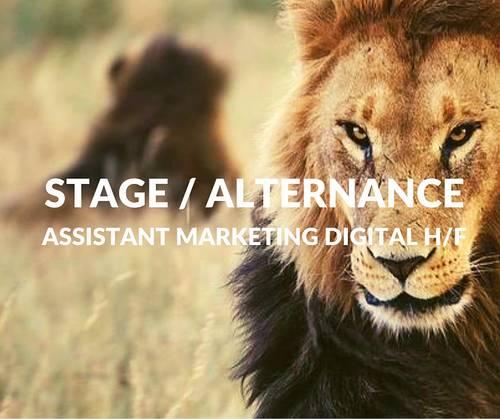 Propose Stage / Alternance - Assistant Marketing digital H/F