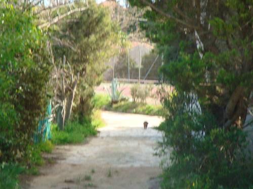 Loue studio caverne, mas occitan 2/3couchages Leucate (11)